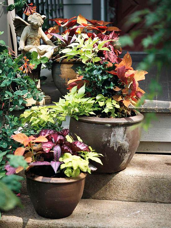 Stair-step plants