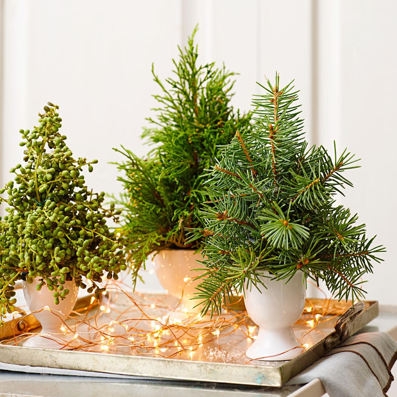 Tiny tannenbaums