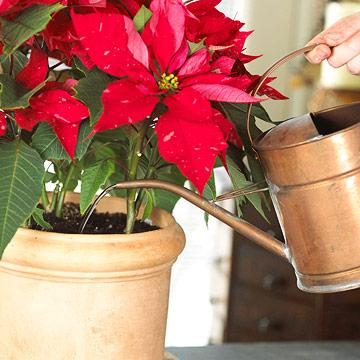 Care for houseplants and bulbs