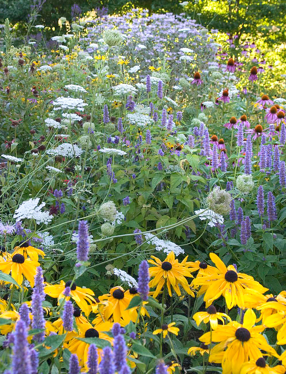 Go wild for wildflowers