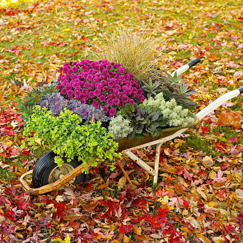 Overflowing wheelbarrow