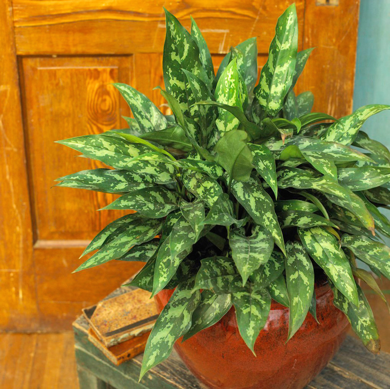 20 Super-Easy Houseplants You'll | Midwest Living on common fern names, tropical plants and names, common tree names,