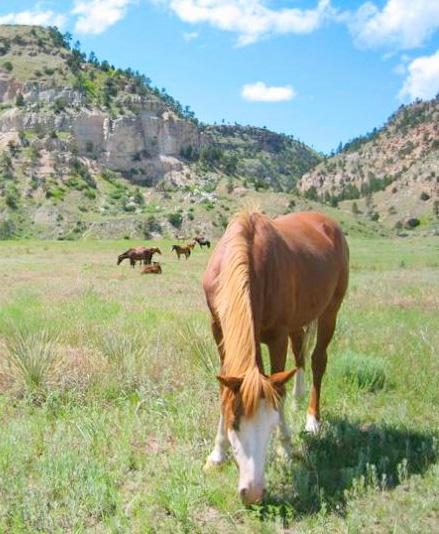 Black Hills Wild Horse Sanctuary