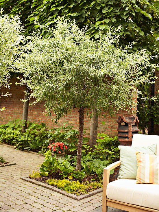 Your outdoor space: Tree techniques