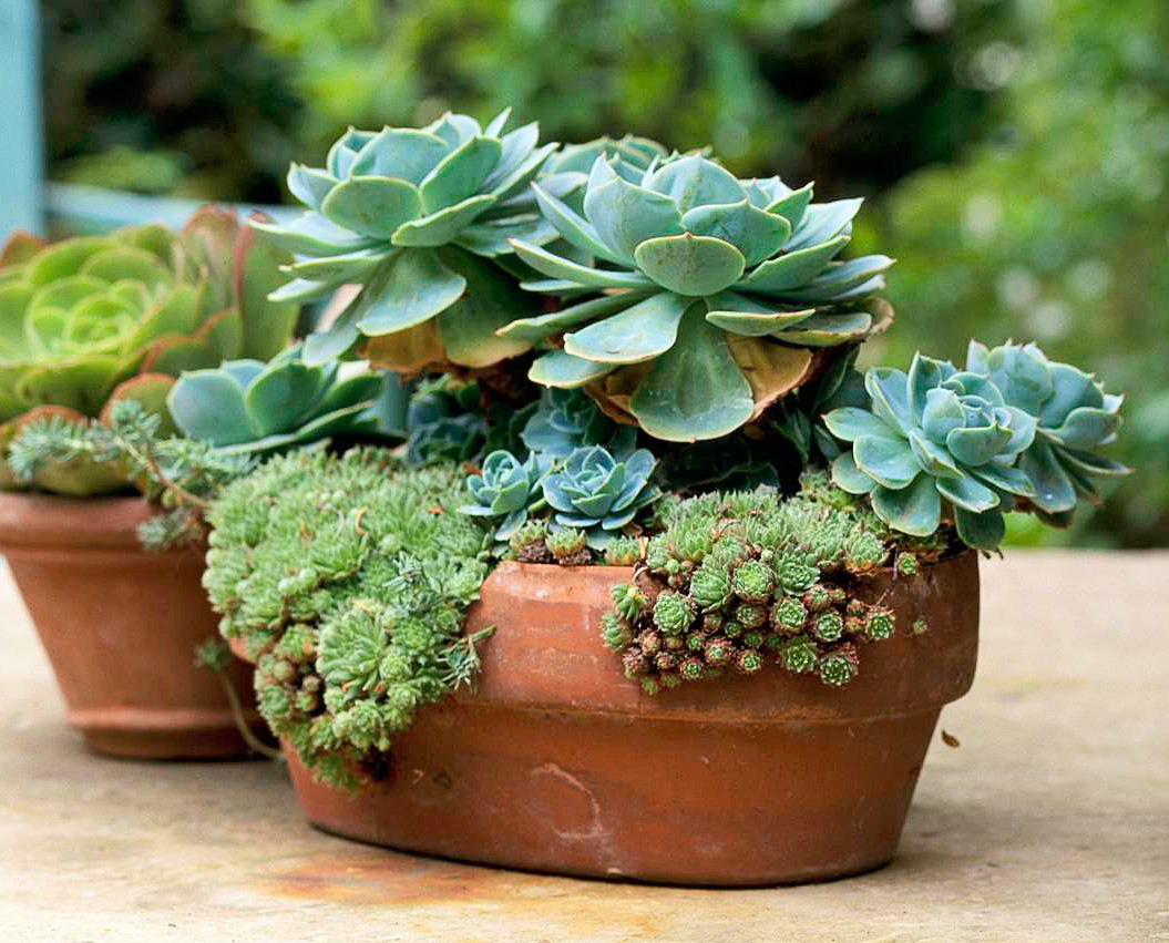 Easy-care succulents