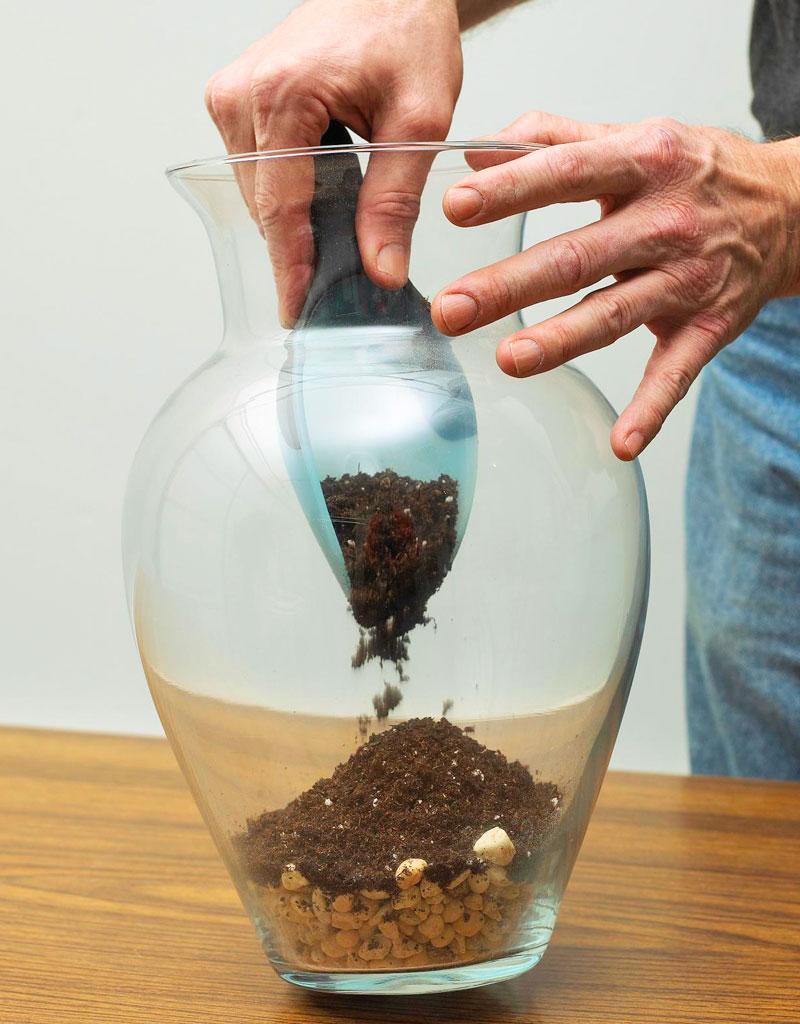 Create a terrarium: First steps