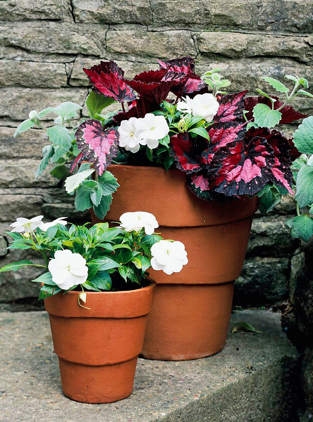 For color, try impatiens