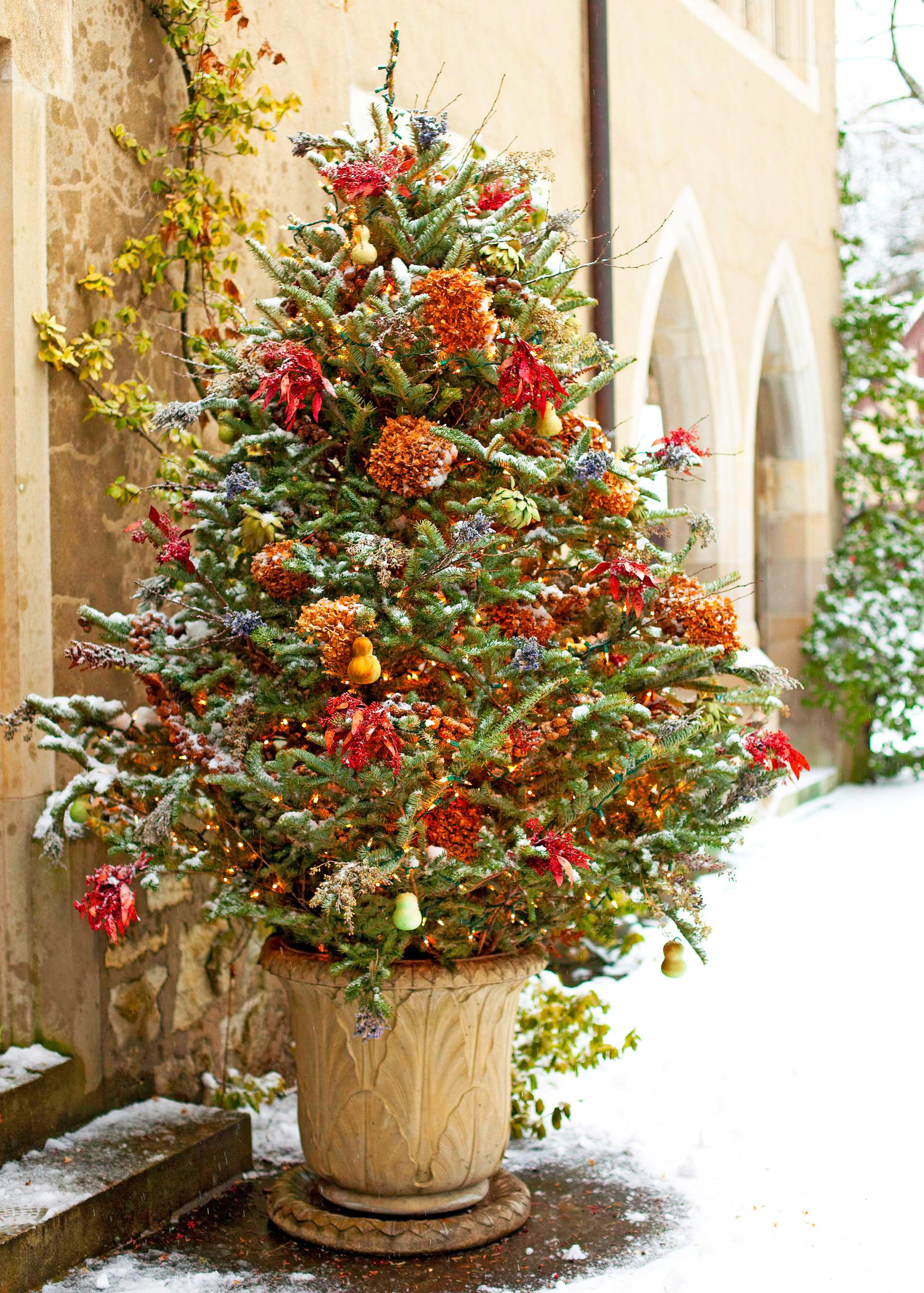 Festive evergreen