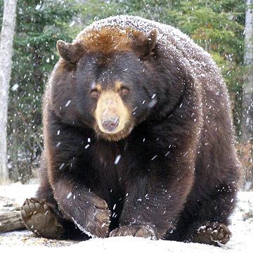 Minnesota's bear market