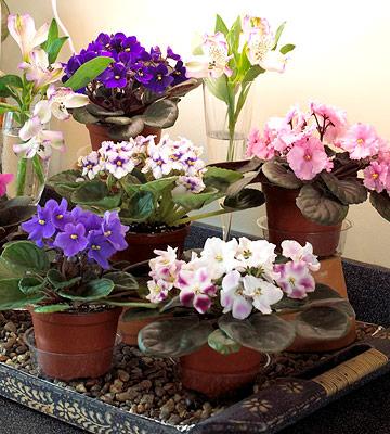 Primp indoor plants