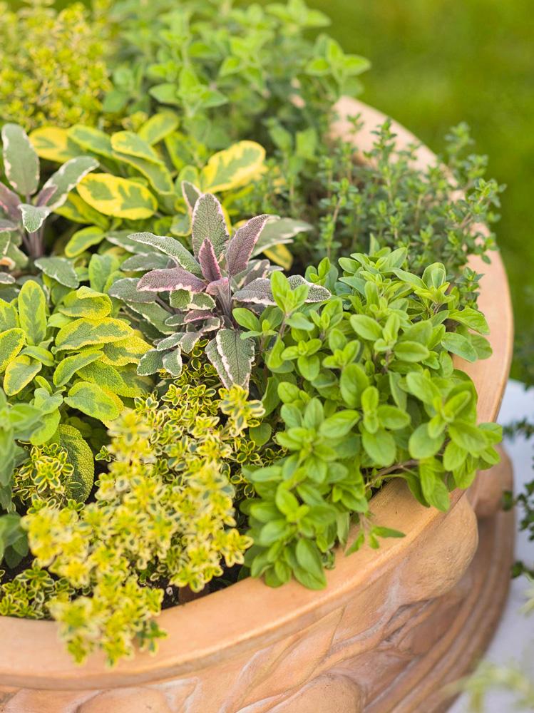 Herb-lovers' choice