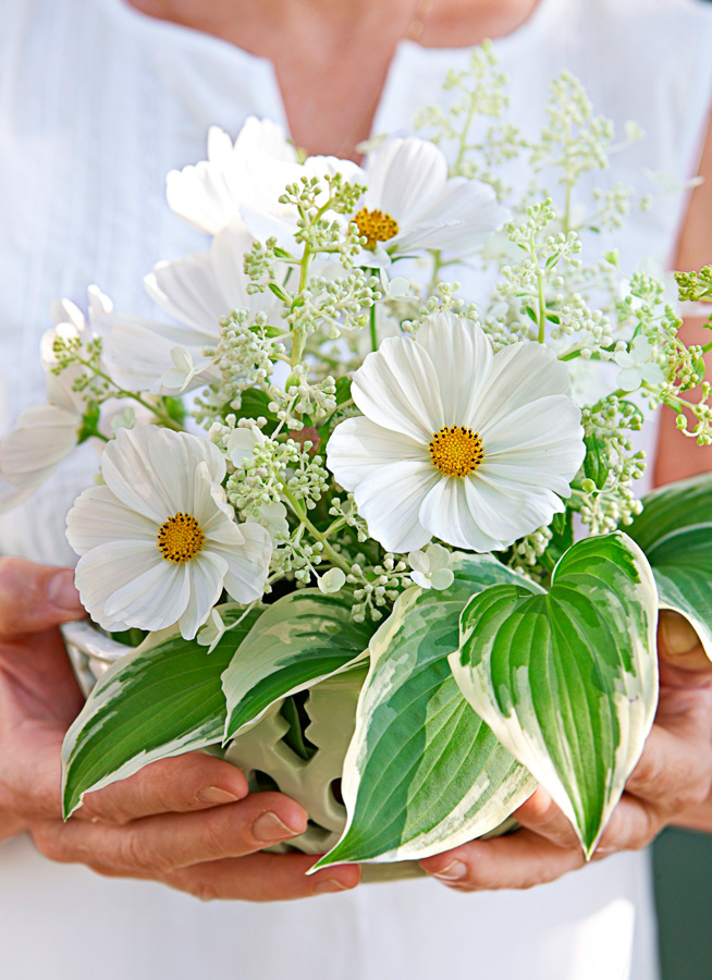 Good annuals for bouquets