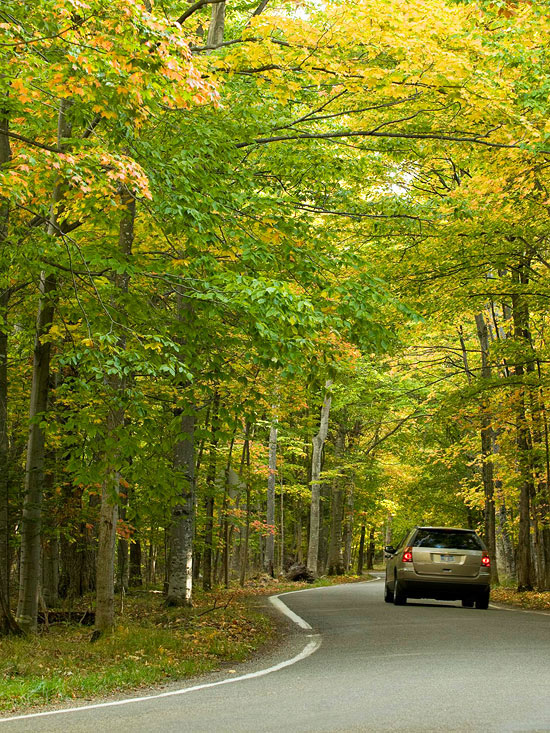 Harbor Springs spotlight: Tunnel of trees