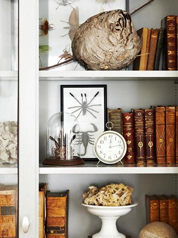 Bookshelf of curiosities