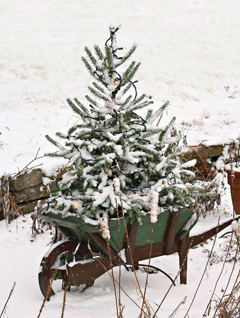 Frosty wheelbarrow