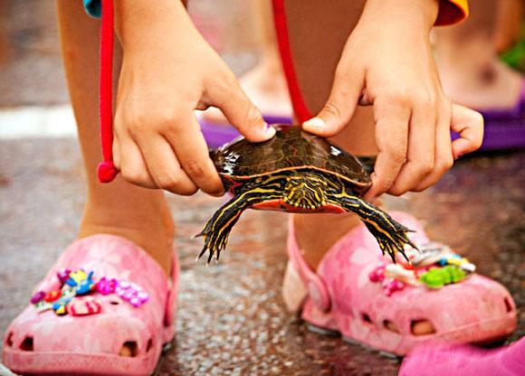 Turtle races in Nisswa.