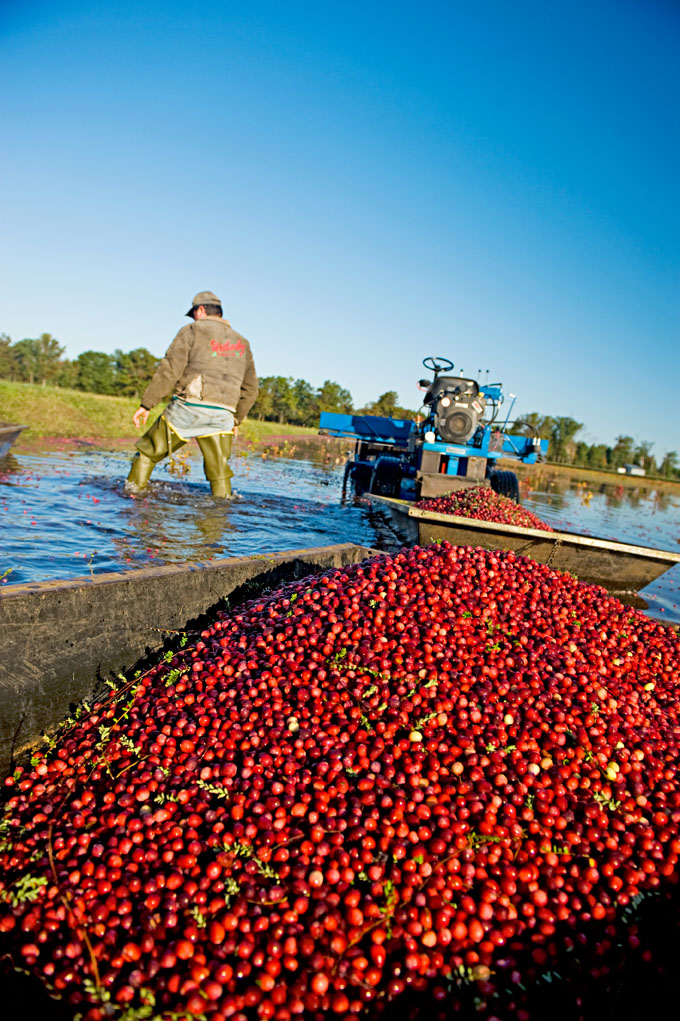 Wisconsin: Cranberry harvest