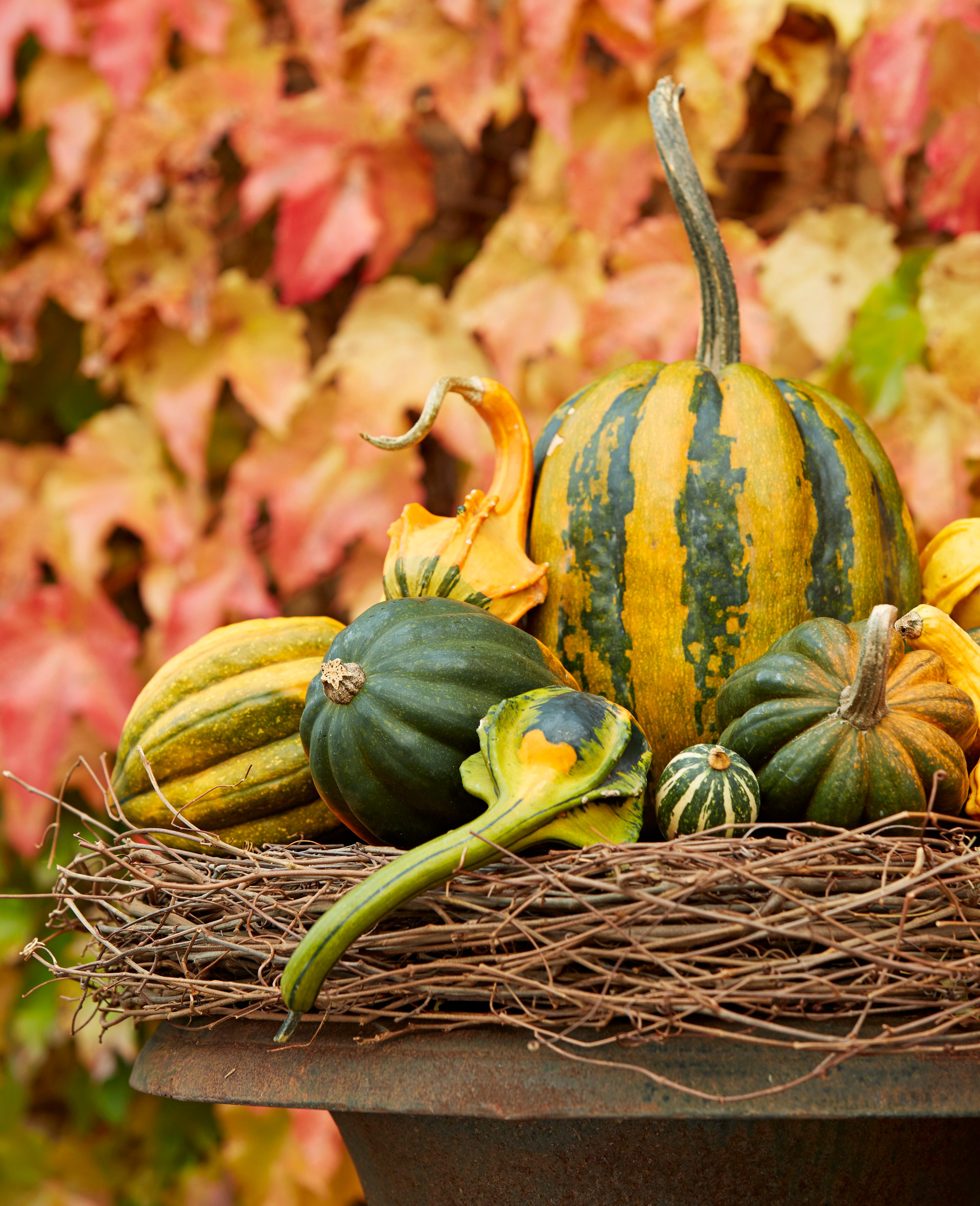 Gourd grouping