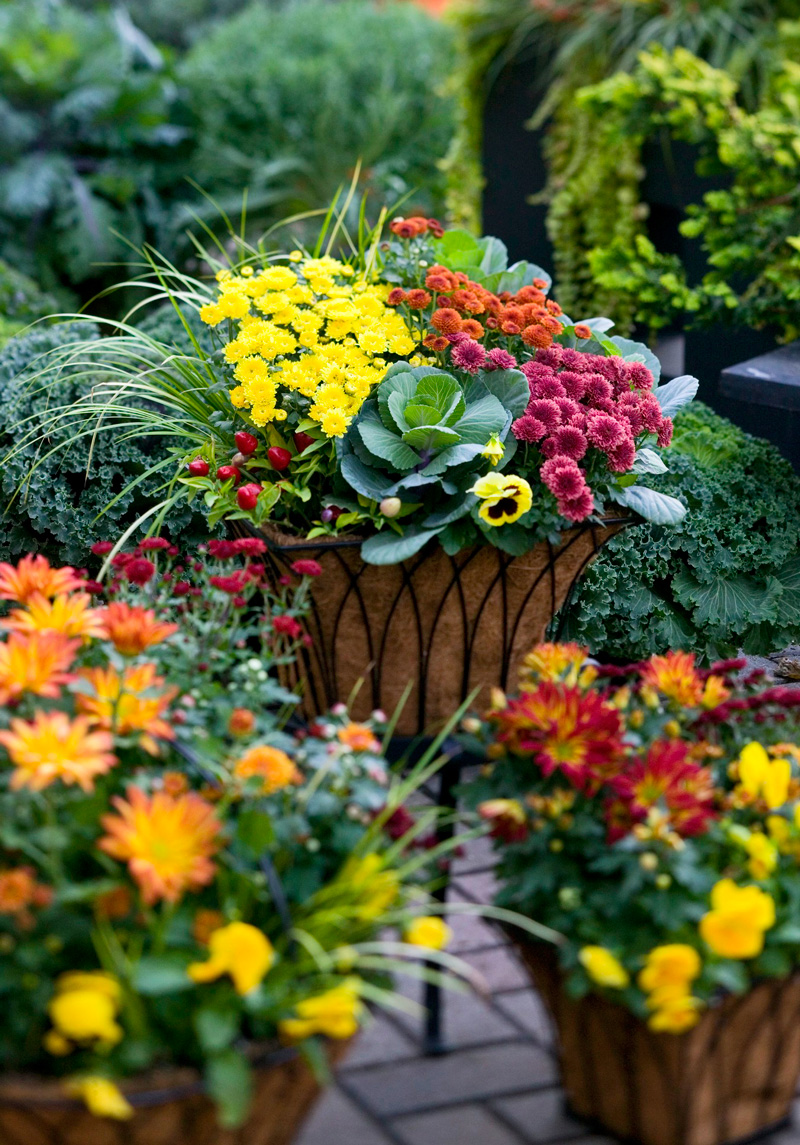 Container garden with mums