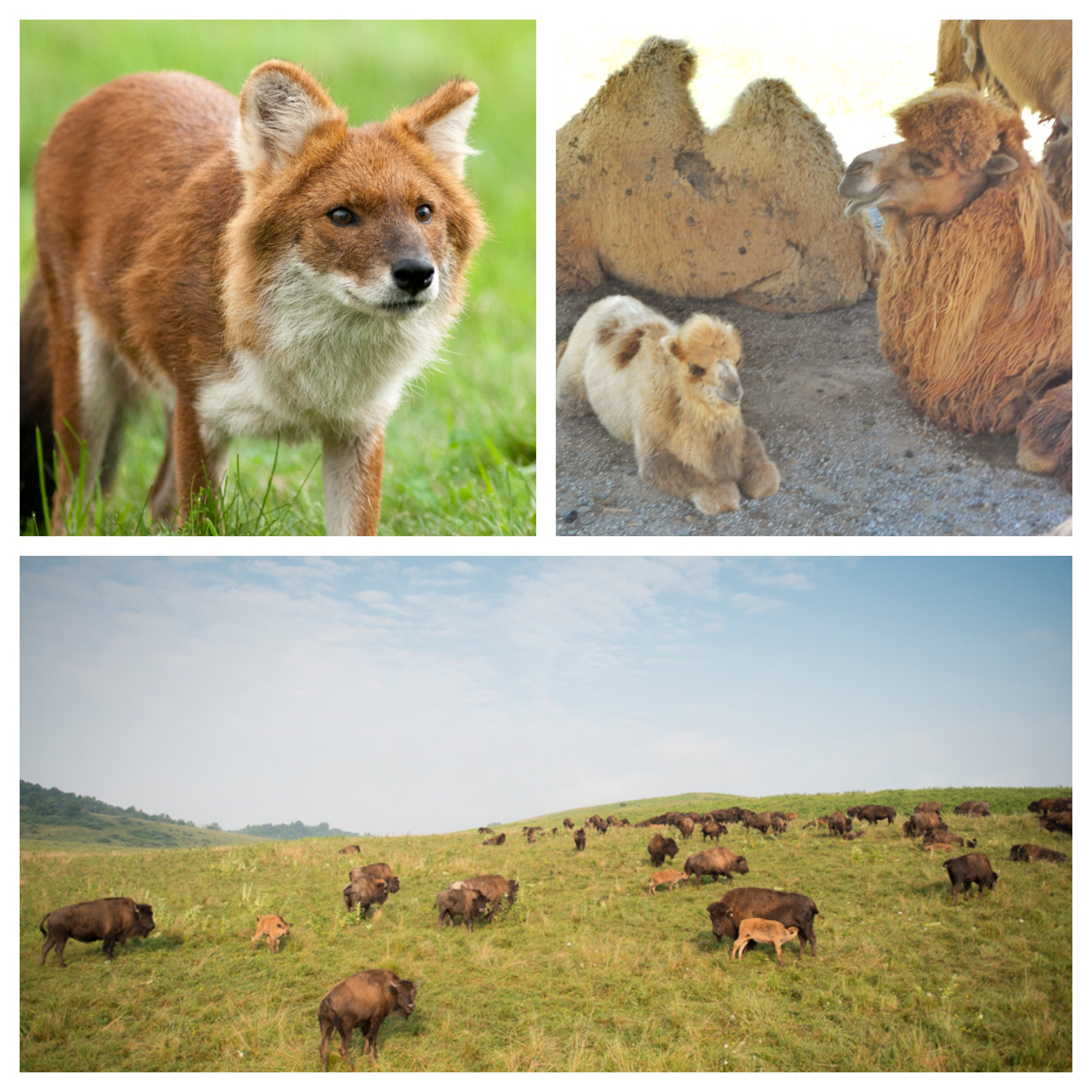Animals at The Wilds