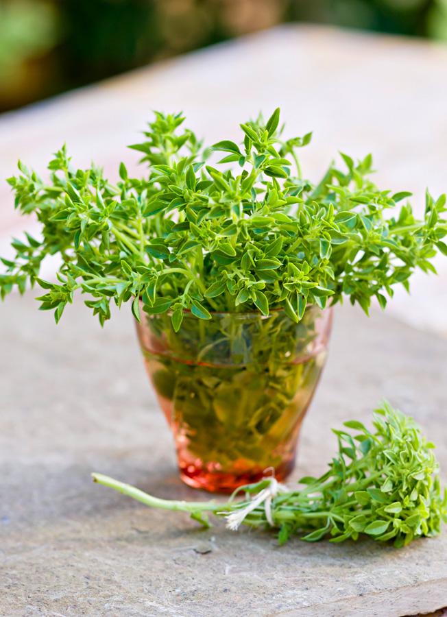 Bush basil (or spicy globe basil)