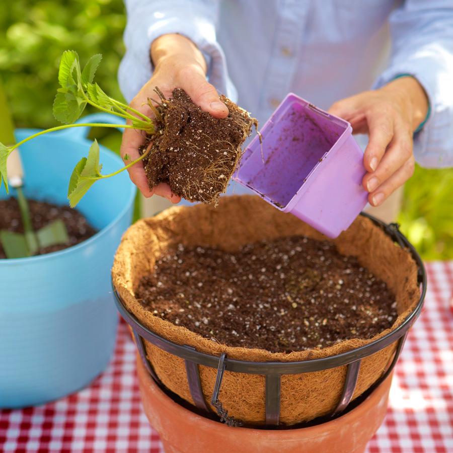 Step 2: Prepare plants