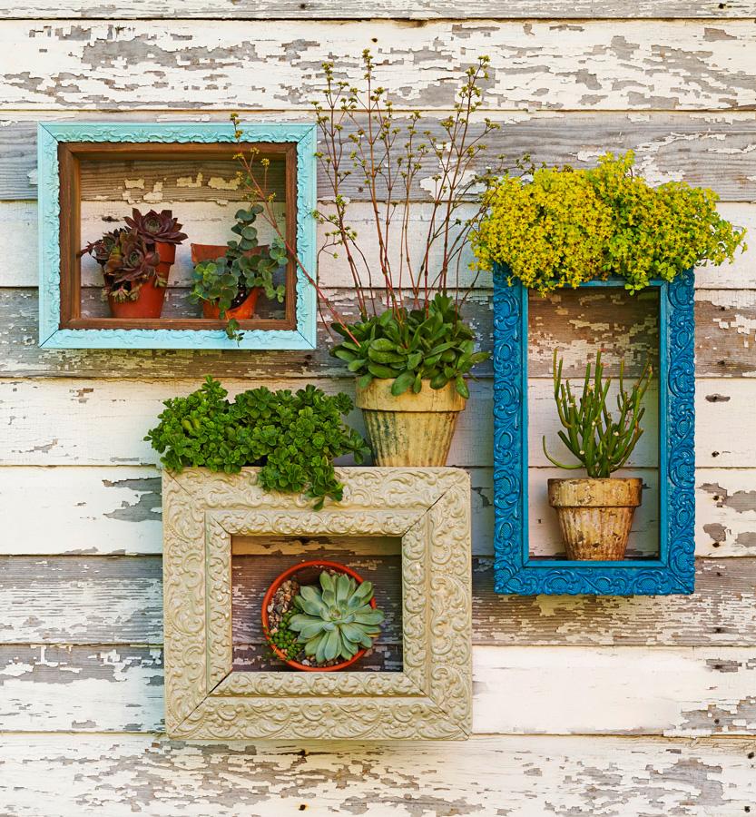 Succulent displays