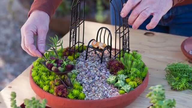 How To: Create a Miniature Succulent Garden