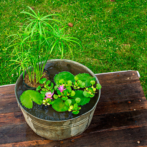 How to plant a water container garden