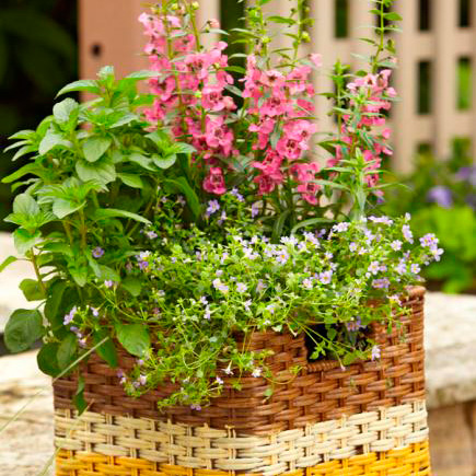 How to paint and plant baskets for container gardens