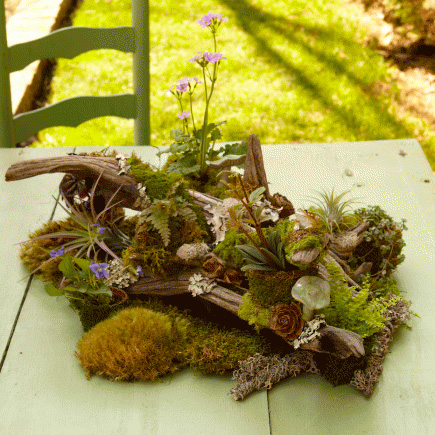 How to make a tabletop woodland garden