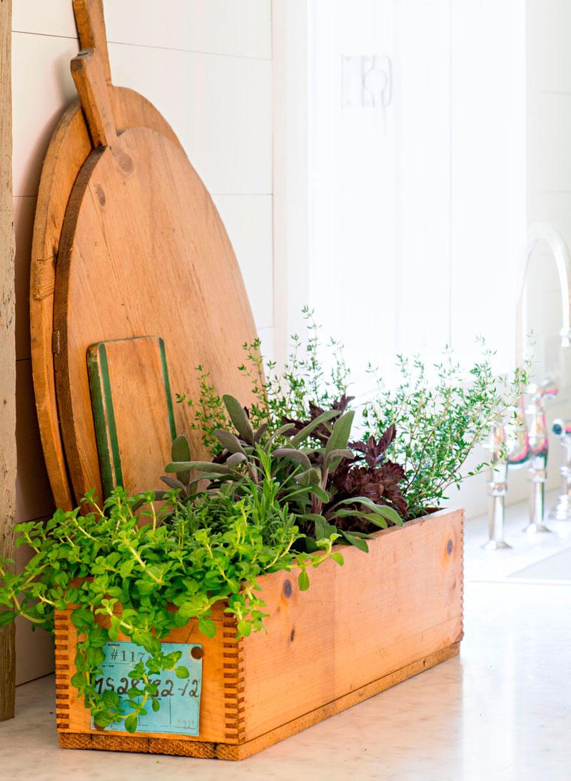 Herbs in a crate