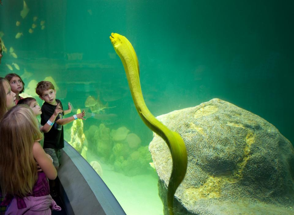 National Mississippi River Museum and Aquarium