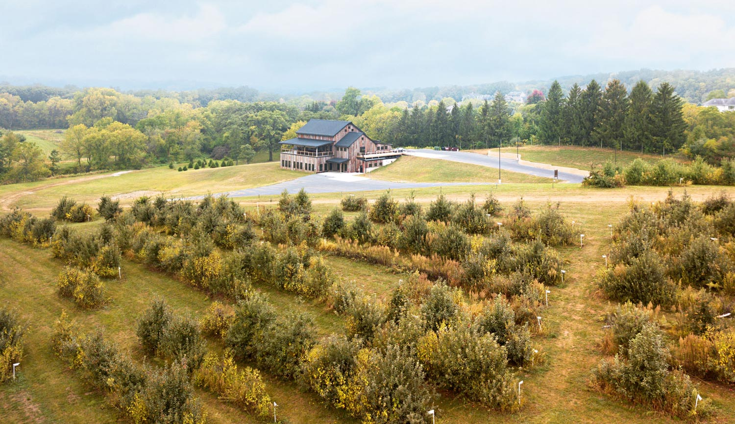 Wilson's Orchard overview