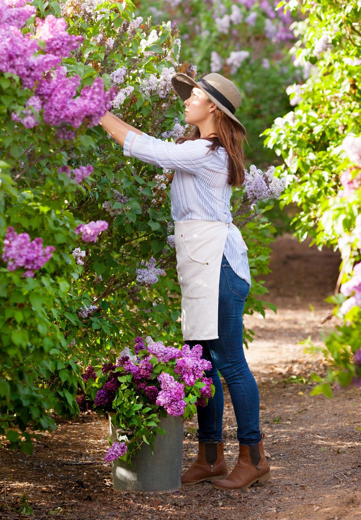 Lilac cutting
