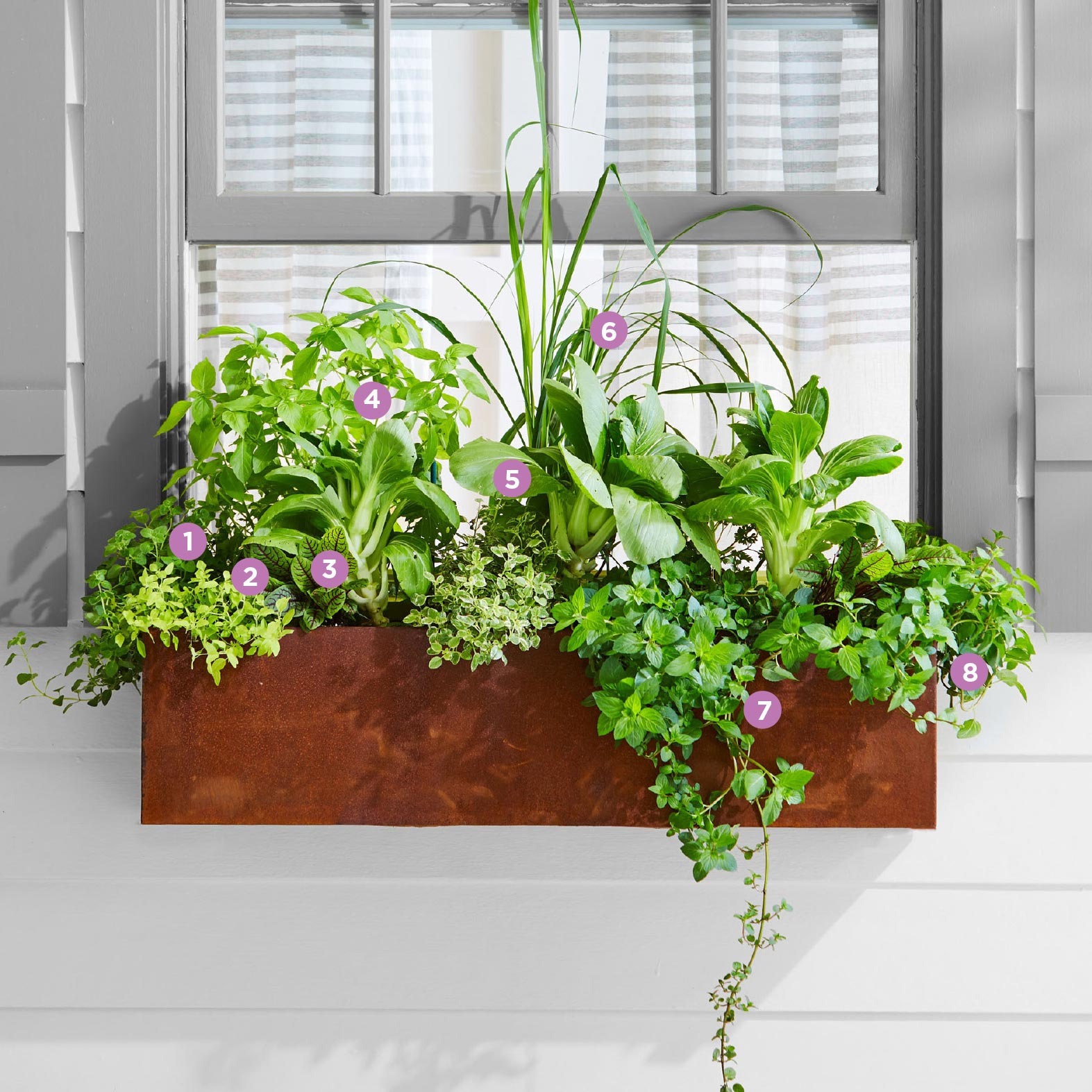 All you can eat window box