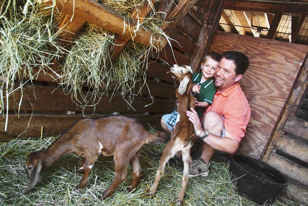 Lambs Farm