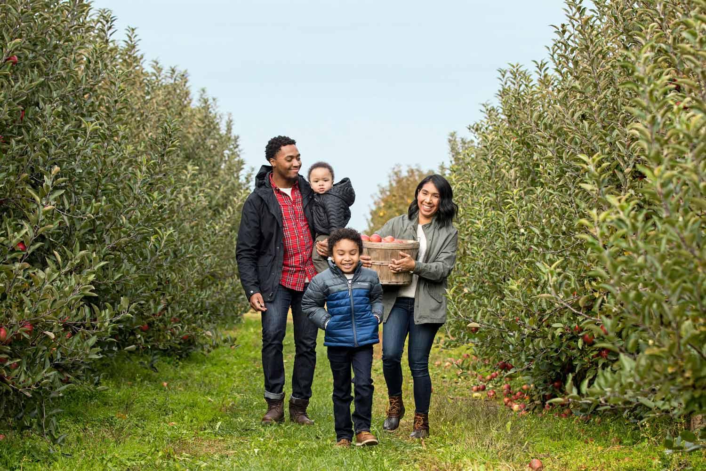 Fennville Apples