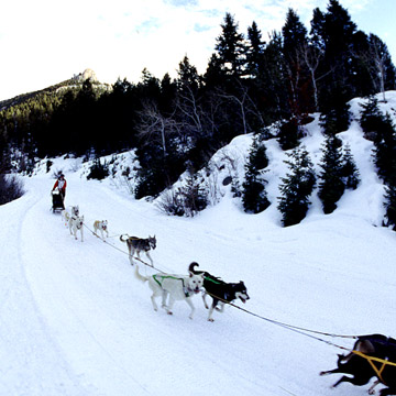 Dogsledding Hot Spot: Yellowstone National Park, WY