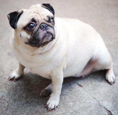 weighty-dog.jpg