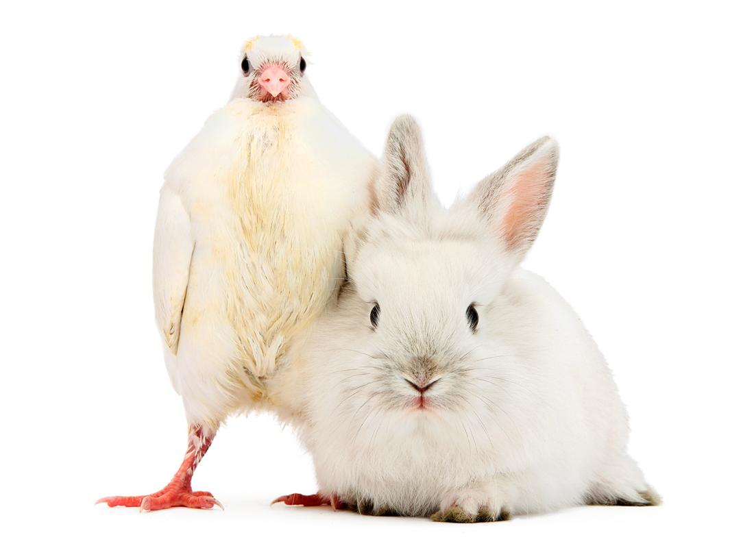 animal doppelganger