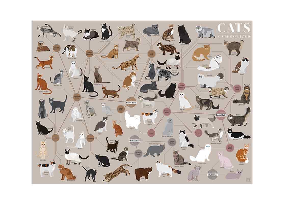Cats, Categorized Poster