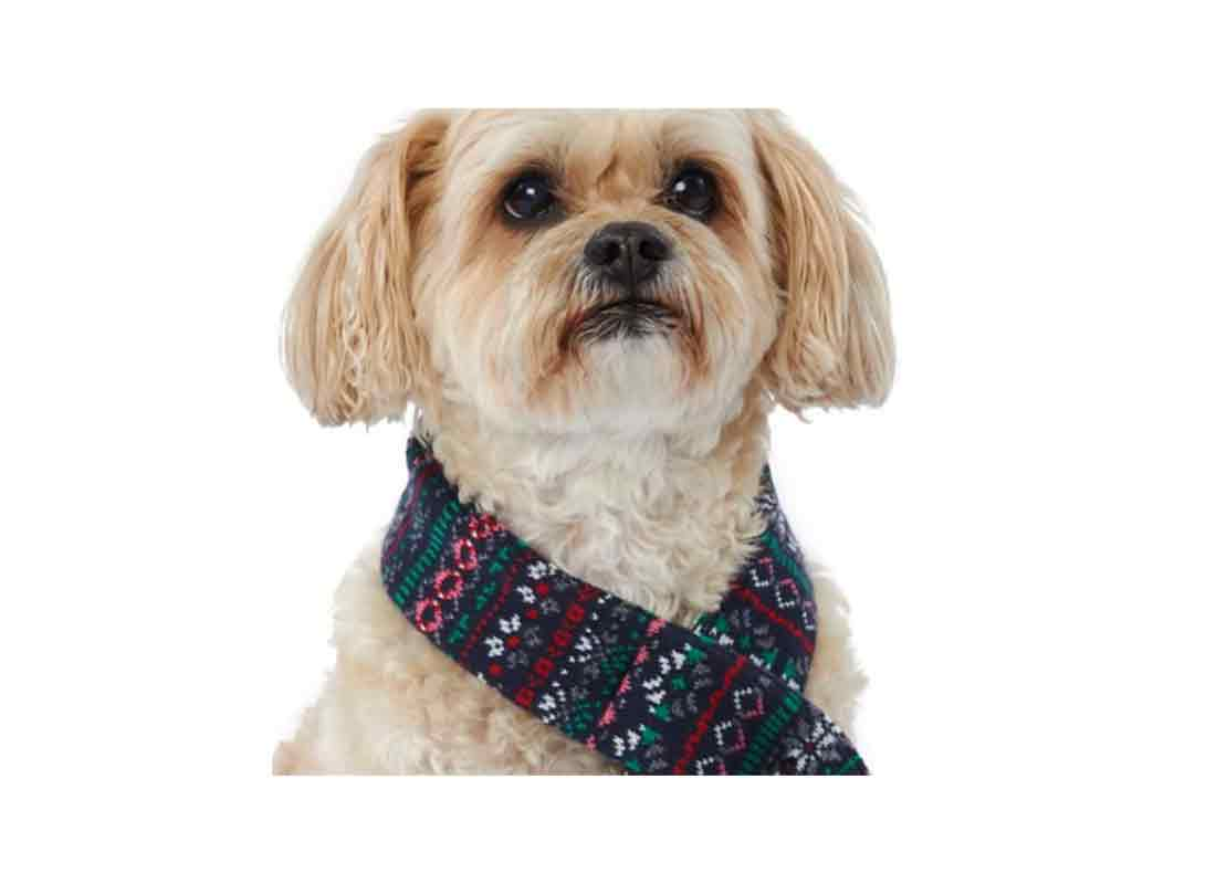 Holiday Pet Scarf