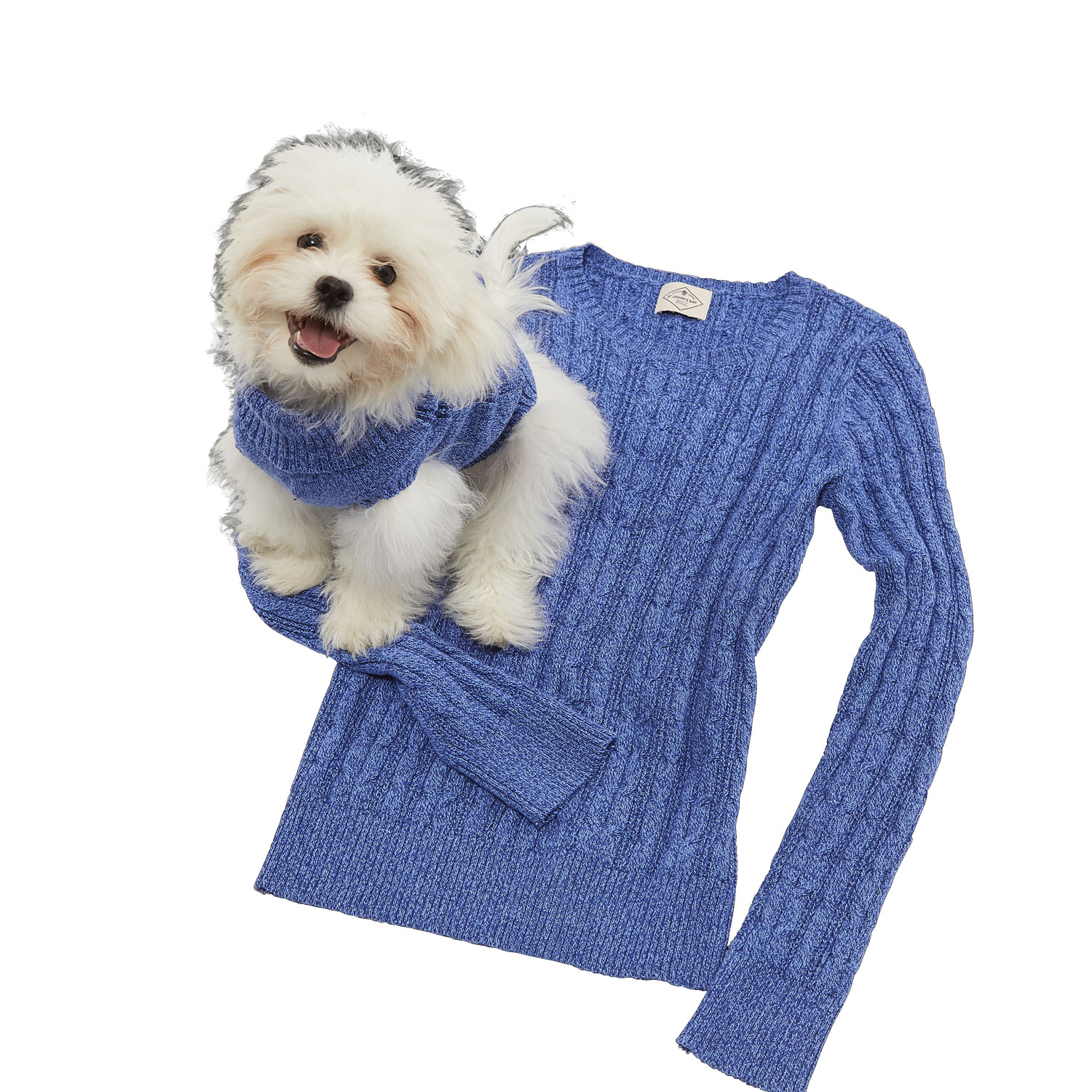 Dog and matching sweater