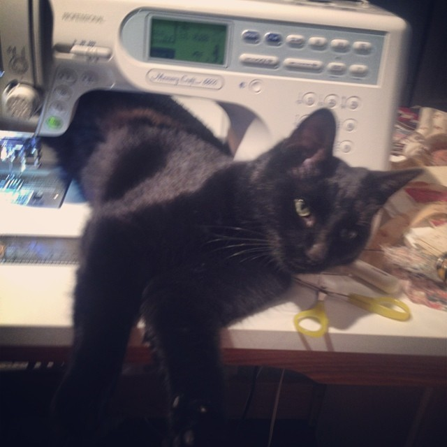"Cats Who ""Sew"""