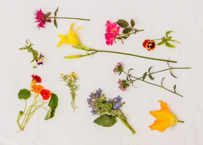 Edible flowers. Photo by Meredith