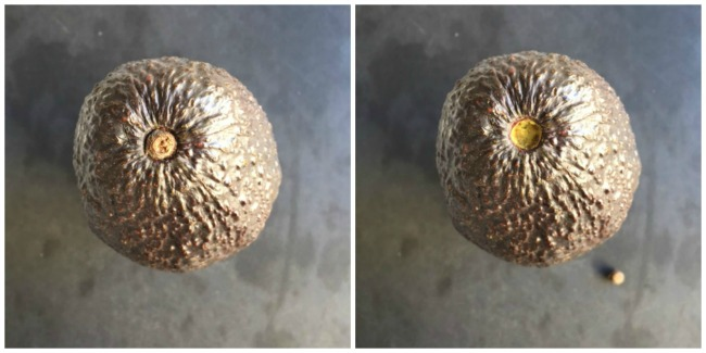 Avocado with and without the Stem Nub