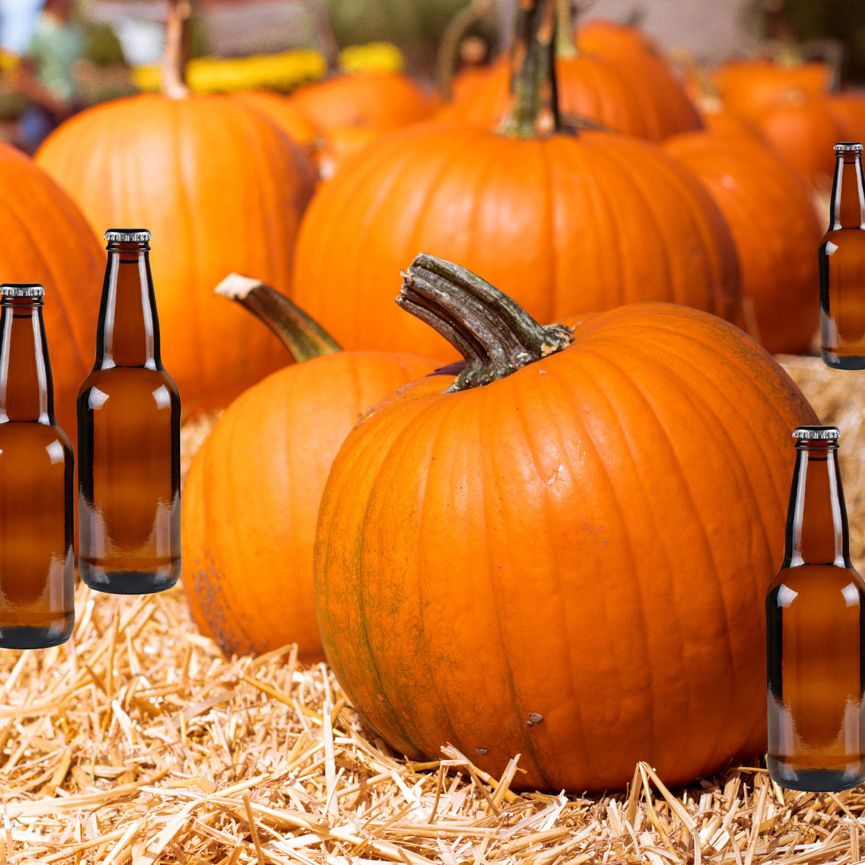 Pumpkins with beer bottles placed around them