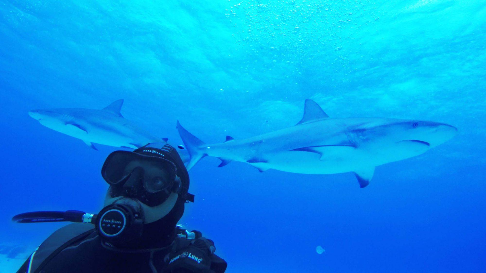 Daymond John Shark Tank Meets Shark Week
