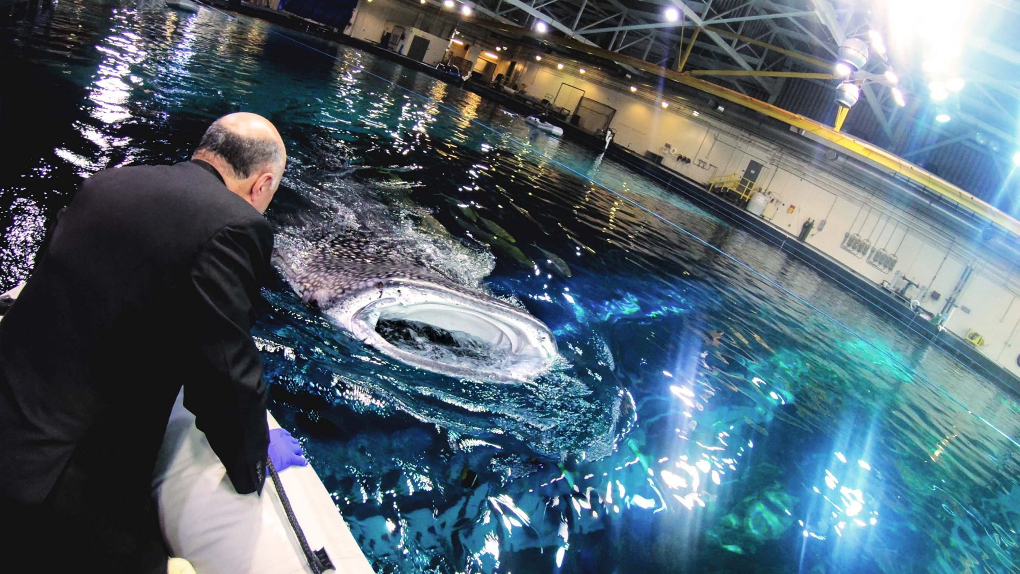 Kevin O'Leary Shark Tank Meets Shark Week